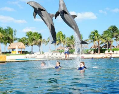 Поездка с плаванием с дельфинами в лагуне Ки Ларго